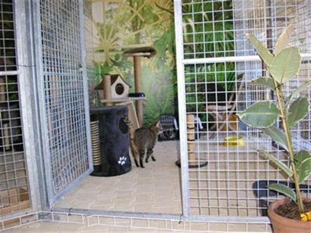 pension chiens chats chenil chatterie plan d 39 orgon 13 bouches du rhone proche vaucluse 84. Black Bedroom Furniture Sets. Home Design Ideas